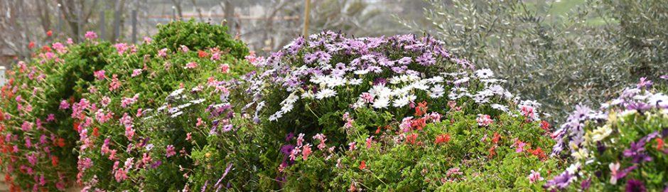 Spring Season for Israel's Brilliant Flowers