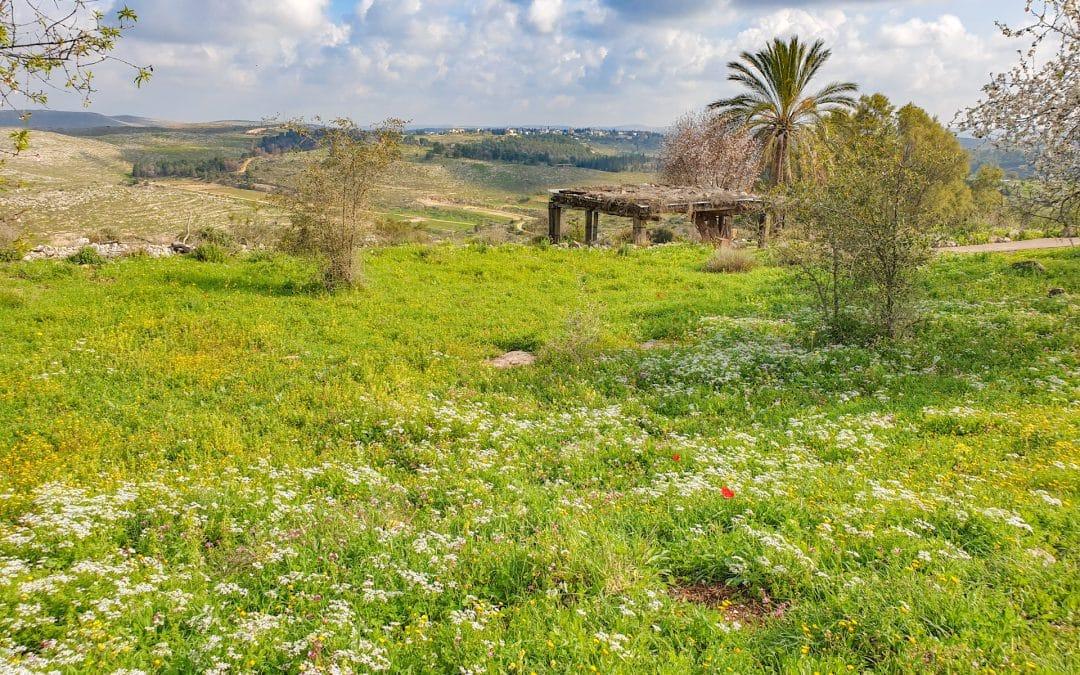 Best 3 Biblical Gardens in Israel